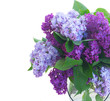 Lilac fresh flowers