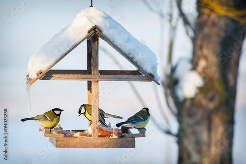 Cuadros en Lienzo Three tit in the snowy winter bird feeder eating pork fat