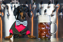 Dog Dachshund Bartender, Black...