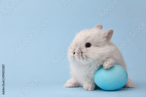 Leinwand Poster Easter bunny rabbit with blue painted egg on blue background