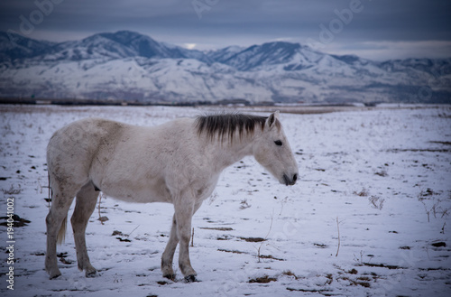 Closeup view of a horse in a snowy mountain landscape Canvas-taulu