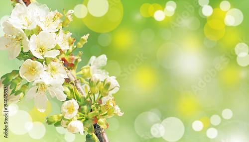 Staande foto Lente Der Frühling ist da!