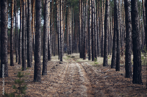 View of trees growing in forest - 194049068