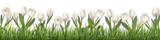 Fototapeta Tulipany - White tulips and grass. Realistic vector illustration.