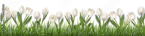 Foto op Plexiglas Tulp White tulips and grass. Realistic vector illustration.