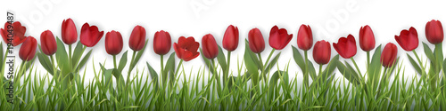Red tulips and grass. Realistic vector illustration. #194049487