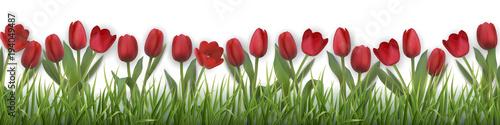Fototapeta Red tulips and grass. Realistic vector illustration. obraz