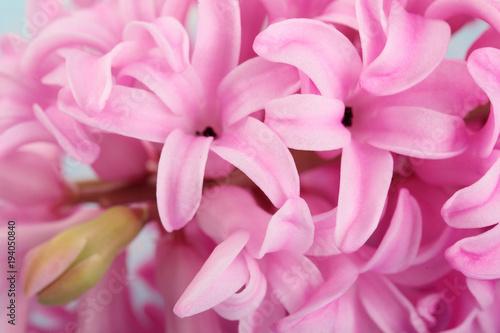 Hyacinth pink surprise dutch hyacinth spring flowers the perfume hyacinth pink surprise dutch hyacinth spring flowers the perfume of blooming hyacinths is a mightylinksfo