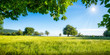 Leinwandbild Motiv Grüne Wiese mit Obstbäumen bei Sonnenschein