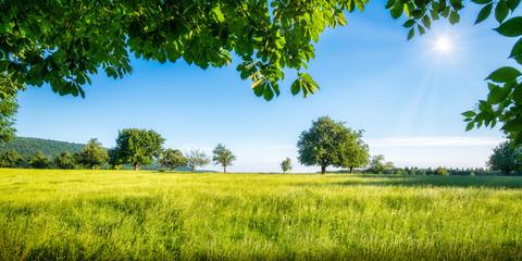 Zielona łąka z drzewami owocowymi w słońcu