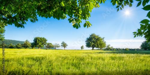 Fotobehang Landschap Grüne Wiese mit Obstbäumen bei Sonnenschein