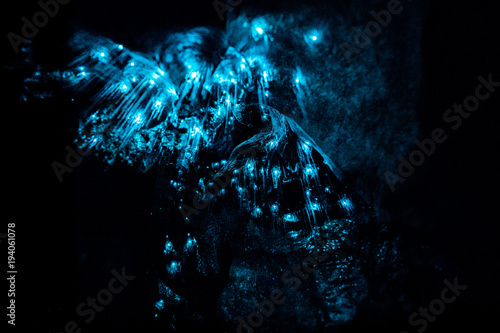 Closeup of New Zealand Glow Worms in Waipu Cave