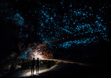 Couple In Waipu Cave