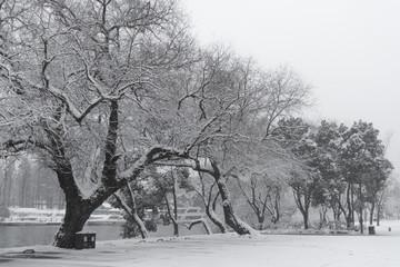 Snow on a park tree