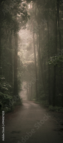 Spoed Foto op Canvas Grijze traf. Moody hazy road scene in an overgrown forest.