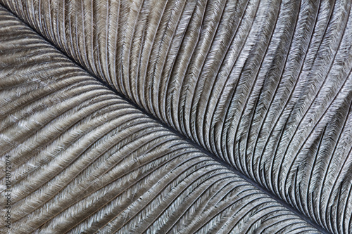 Photo sur Toile Macro photographie Macro image of an ostrich feather