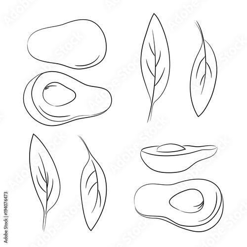 vector contour avocado vegetable coloring book simple ...