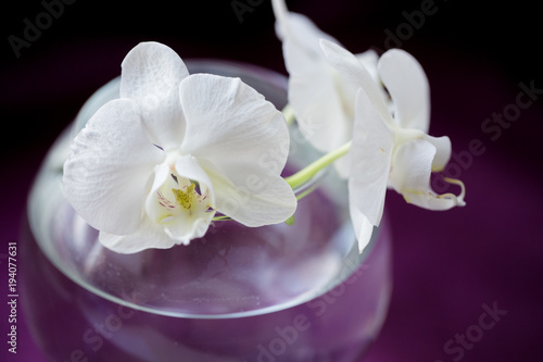 Recess Fitting Spa white flower orchid