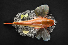 Red Gurnard Fish On Ice On Black Stone Background