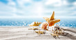 summer shell and beach