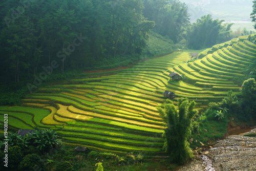 Terraced rice field in harvest season in Mu Cang Chai, Vietnam.