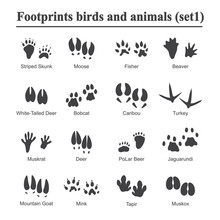 Wildlife Animals And Birds Foo...