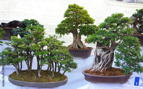 Bonsai Trees For Sale At The Flower Festival In Chiang Mai Thailand Buy This Stock Photo And Explore Similar Images At Adobe Stock Adobe Stock