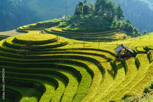Photo sur Toile Les champs de riz Terraced rice field in harvest season in Mu Cang Chai, Vietnam. Mam Xoi popular travel destination.