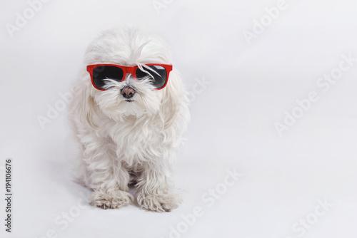 Photo  perro gracioso con gafas de sol