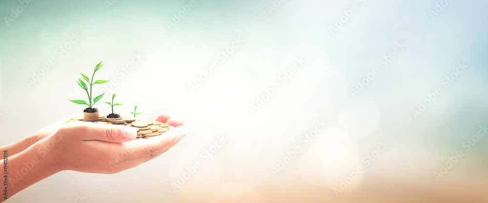 Fototapeta Invest and fund concept: Human hands save holding golden coin stack and small tree on blurred nature background.