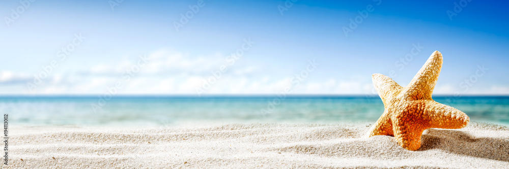 Fototapety, obrazy: Shell on sand and summer time