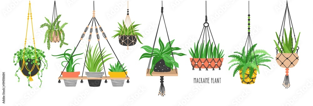 Fototapety, obrazy: Set of macrame hangers for plants growing in pots. Bundle of hanging planters made of cotton cord, beautiful handmade home decorations isolated on white background. Cartoon flat vector illustration.