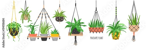 Valokuva  Set of macrame hangers for plants growing in pots
