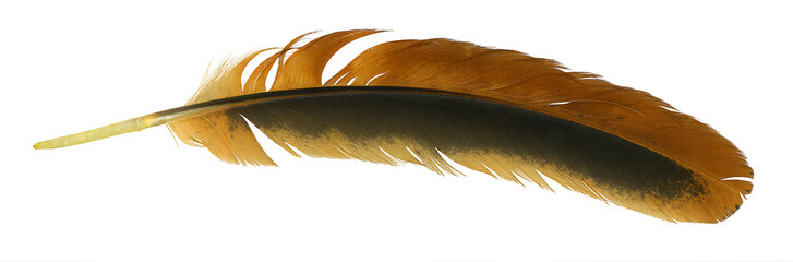 Feather isolate on white background. High quality details.
