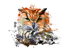 Owl With Abstract Paint On White Background