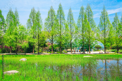 Poster Lime groen Green trees and pond in Korea