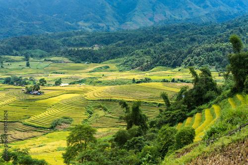 Foto op Aluminium Beijing Terraced rice field landscape in harvesting season in Y Ty, Bat Xat district, Lao Cai, north Vietnam