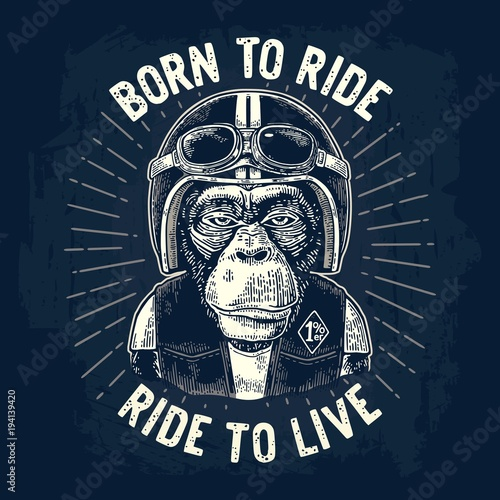Monkey in the motorcycle helmet and glasses Poster