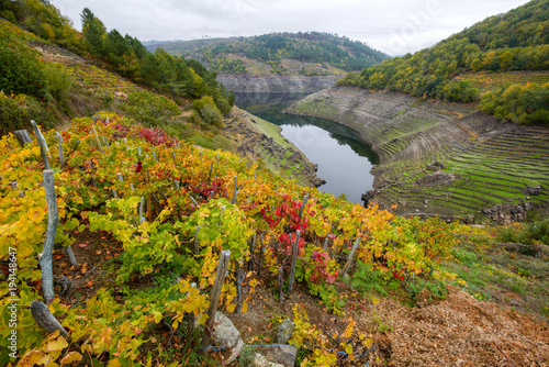 Fototapeta Ribeira Sacra and its hillsides covered with vineyards