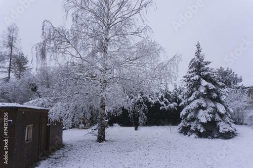 wintergarden Canvas Print