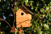Bird Nesting Box, Suspended On A Tree Surrounded By Ivy.