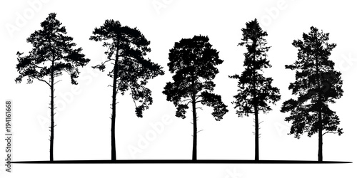 Fotografía Set of realistic vector silhouettes of coniferous trees - isolated