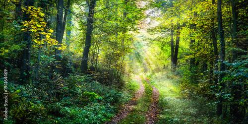 Poster de jardin Route dans la forêt Wanderweg im Frühling führt zu einer grünen Waldlichtung im Wald