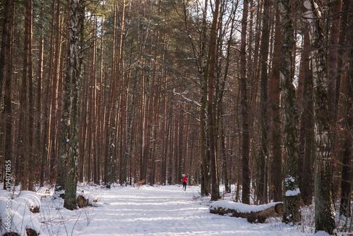 Tuinposter Weg in bos Leśna droga zasypana świeżym śniegiem z biegnącą w dali młodą kobietą