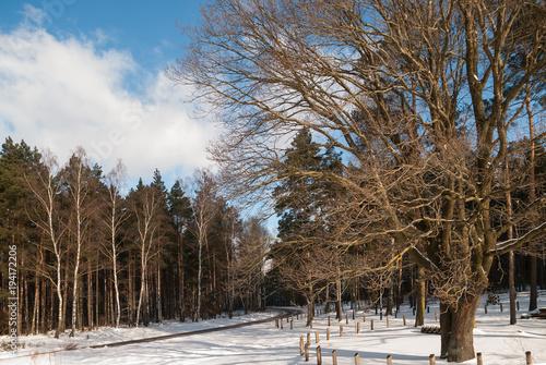 Tuinposter Weg in bos Droga przez las zimą
