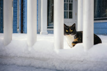 A Cat Walks In The Winter On T...