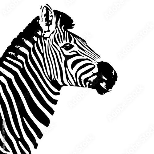 Poster Zebra Black and white zebra profile. Equus quagga.