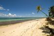 Palmon the beach in Punta Cana