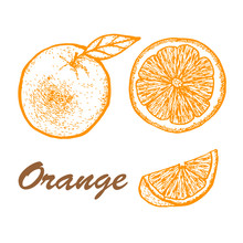 Hand Drawn Set Of Orange. Exotic Tropical Fruit Vector Drawings Isolated On White Background. Botanical Illustration Of Fruits.