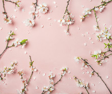 Spring Floral Background, Texture And Wallpaper. Flat-lay Of White Almond Blossom Flowers Over Light Pink Background, Top View, Copy Space. Womens Day Holiday Greeting Card Or Wedding Invitation